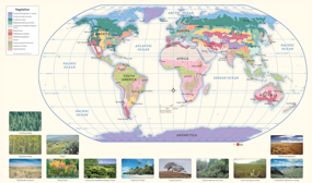 World Vegetation Wall Map