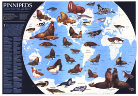 Pinnipeds Around The World Map 1987